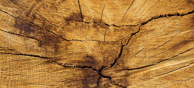 Holzbadewannen aus Akazienholz I Badezuber I Badebottich Robinie für das Badezimmer