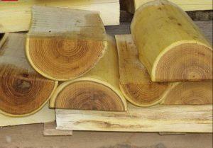 akazie robinie hartholz